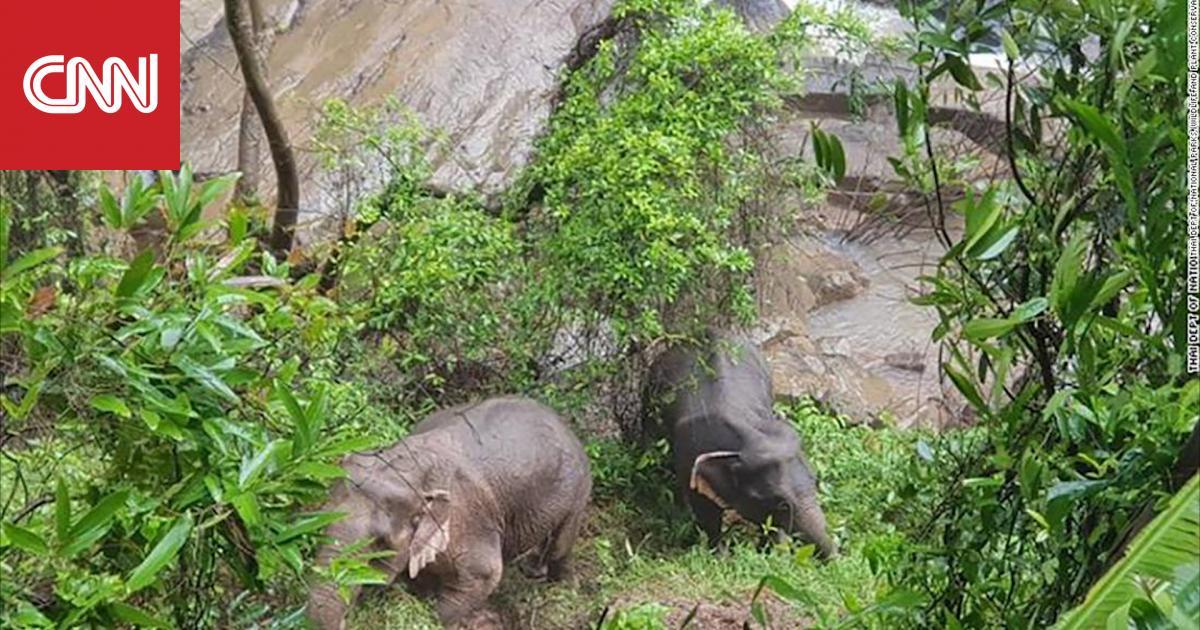 حاولوا إنقاذ دغفل.. سقوط 11 فيلا من شلال على ارتفاع 152 مترا